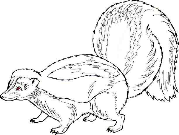Skunk free images at vector clip art online for Coloring page of a skunk