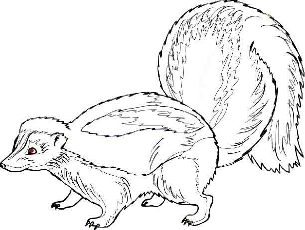 Skunk Free Images at Clkercom vector clip art online royalty