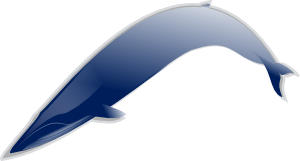 Bluewhale Md Clip Art