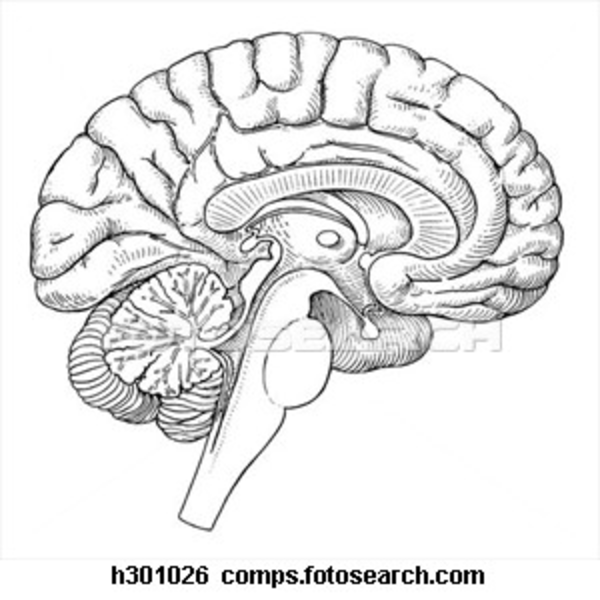Images of blank half brain diagram spacehero brain sagittal section h free images at clker ccuart