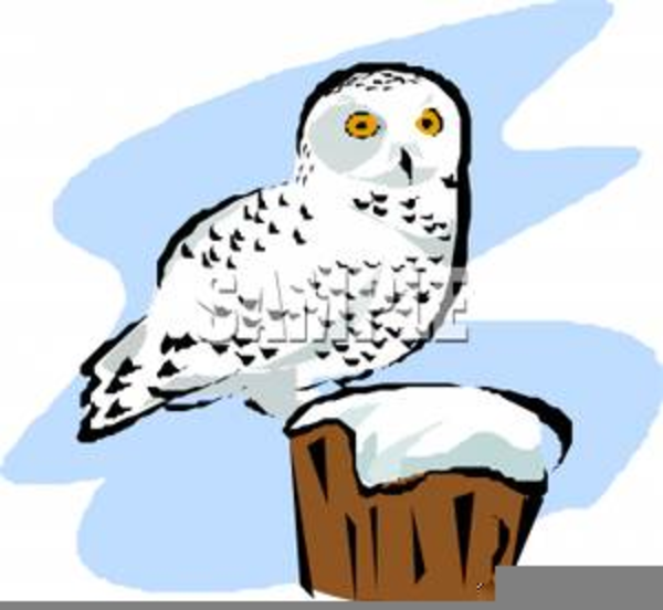 snowy owl free clipart free images at clker com vector clip art