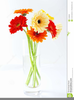 Daisies Clipart Free Image