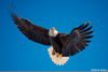 Free Clipart Of Eagles Soaring Image