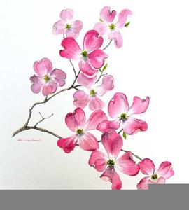 dogwood blossoms clipart free images at clker com vector clip rh clker com clipart dogwood tree dogwood clip art free