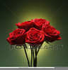 Cliparts Roses Rouges Image