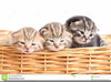 Cats And Dogs Clipart Free Image