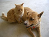 Dog And Cat Together Image