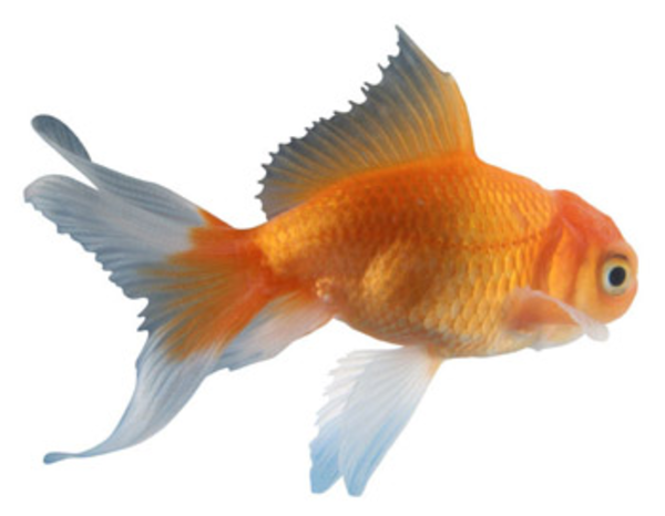 Fish 11 Free Images At Vector Clip Art