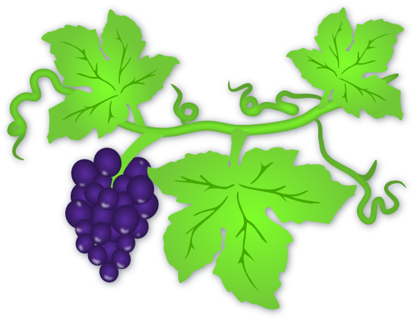grape vine clip art at clker com vector clip art online royalty rh clker com grape vine clipart grape vine clipart border