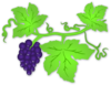 Grape Vine Clip Art