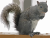 The Cutest Squirrel Clip Art