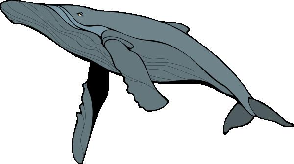big blue whale clip art at clker com vector clip art online rh clker com
