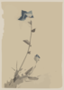[blue Flower Blossom And Bud At The End Of A Stalk] Clip Art