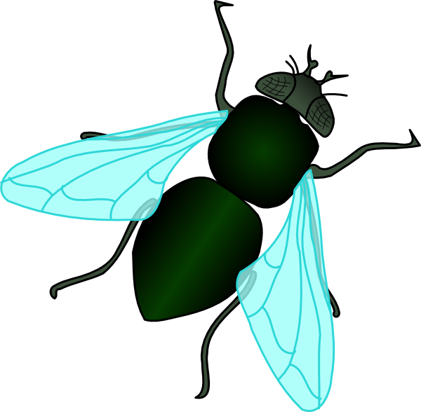 animated fly clipart - photo #1