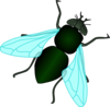 Green House Fly Clip Art