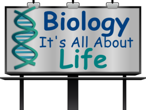 biology clip art at clker com vector clip art online royalty free rh clker com biology clipart anatomy evolution biology clipart