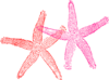 Two Starfish Clip Art