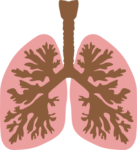 Lungs And Bronchus Clip Art at Clker.com - vector clip art ...