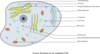 Animal Cell Labelled Clip Art