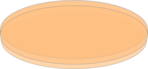 Tc Dish, Orange Clip Art