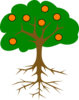The Orange Tree Clip Art