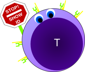 Naive T Cell Green Clip Art