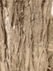 Tree Bark Texture Clip Art