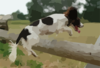 Dog Jumping Over Fence Clip Art