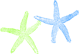 Blue And Green Starfish Clip Art
