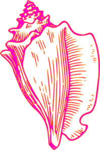 Pink Yellow Conch Shell 2 Clip Art
