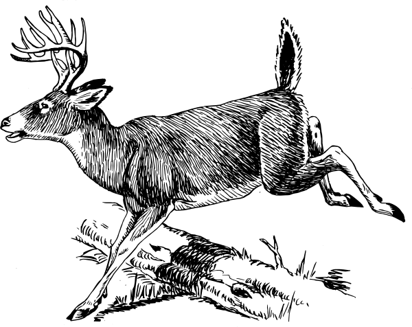 Deer Clip Art at Clker vector