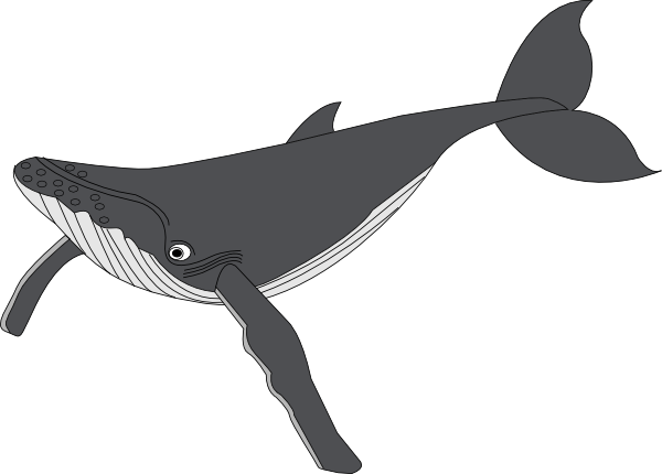 Humpback whale clipart - photo#11