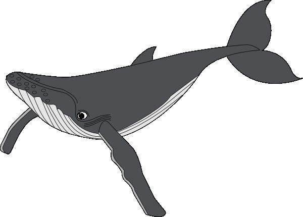 Humpback whale clipart - photo#11