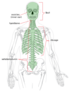 Axial Skeleton Clip Art