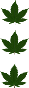 Three Cannabis Leaves Clip Art