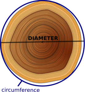 Circumference Of Tree Clip Art