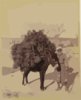 Palestine, Transportation, Donkey Carrying Load Of Roots And Twigs For Fuel Clip Art