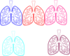 Lung Color Tika Hp Simple Clip Art