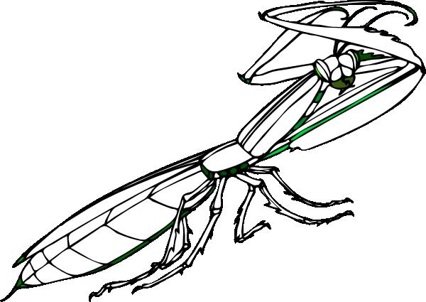 praying mantis clip art at clker com vector clip art online rh clker com praying mantis clipart free praying mantis clipart