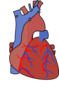 Heart Diagram Vein Clip Art