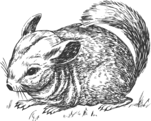 Grayscale Chinchilla Clip Art