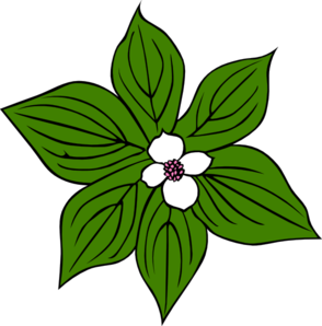 Green Plant With White Flower Clip Art