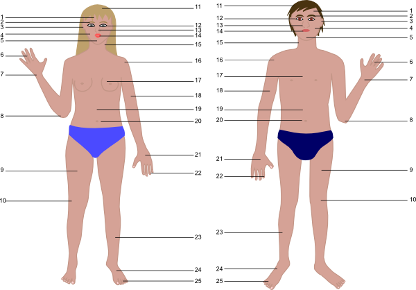 Cartoon Human Body Parts