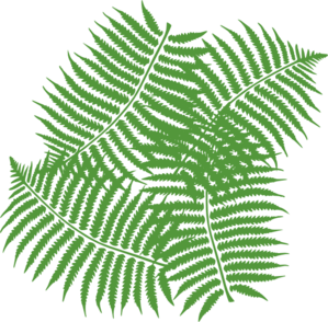Four Fern Leaves Clip Art