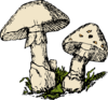 Two Mushrooms Clip Art