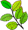 Leaves Brown Edges And Spots Clip Art