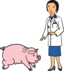 Doctor And Pig Clip Art