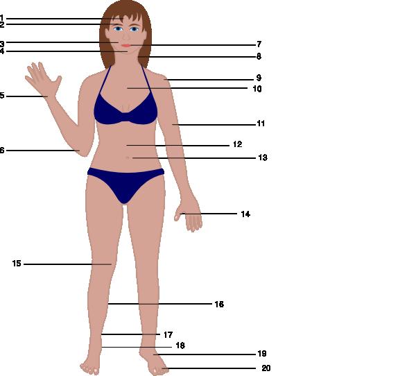 Human Body Vector Free Human Body Clip Art