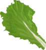 Green Leaf Clip Art