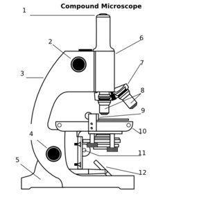 Compound microscope clip art at clker vector clip art online compound microscope clip art ccuart Images
